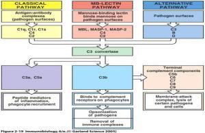 complement pathways 3