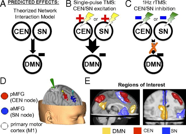 Interaction of Brain Networks http://www.pnas.org/content/110/49/19944.abstract