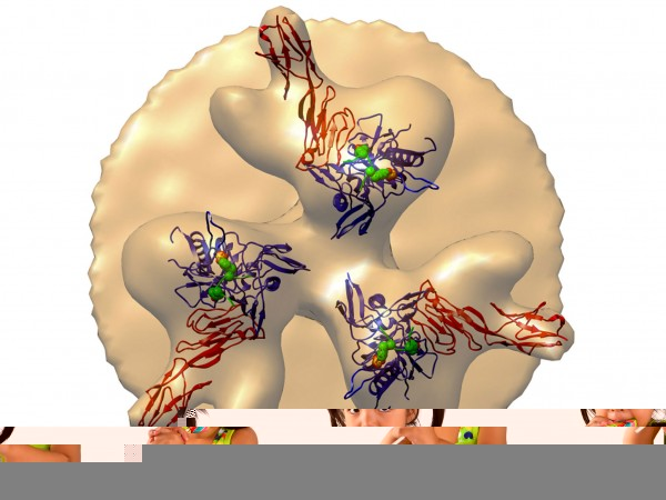Artificial Antibody  http://news.sciencemag.org/biology/2015/02/stopping-hiv-artificial-protein