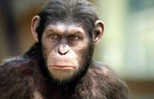 CRISPR Engineered Intelligent Apes