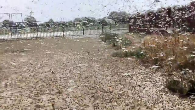 Dark Plagues of Locusts https://abcnews.go.com/International/plagues-locusts-darken-skies-threaten-crops-southern-russia/story?id=32778681