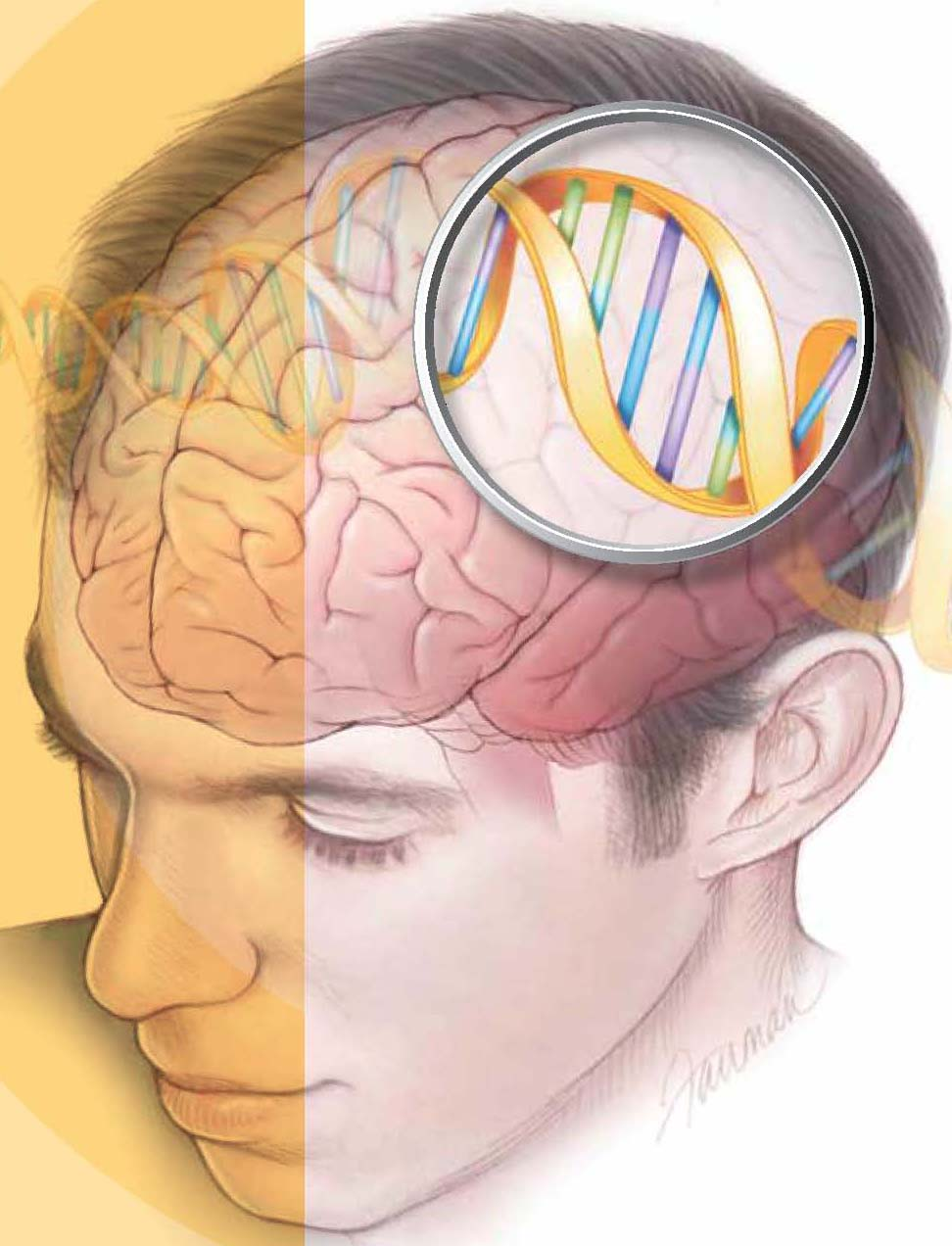 Image result for genes and the brain