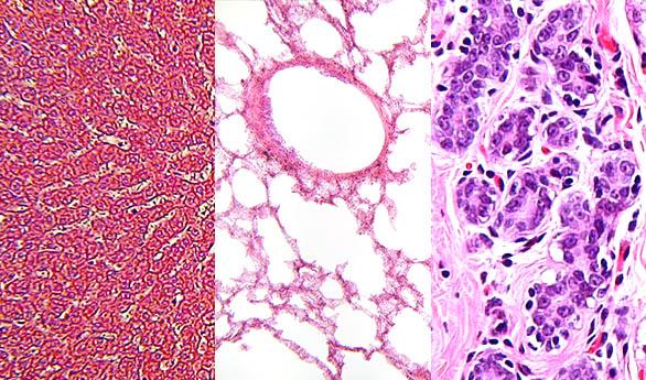 Human Histologic Sections Organovo