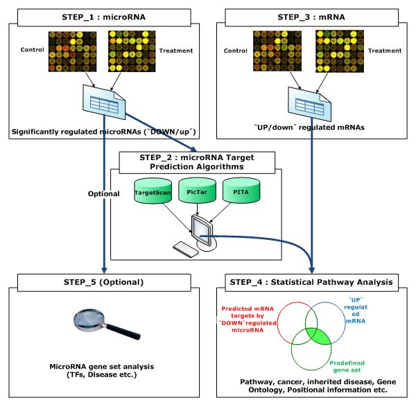 MicroRNA and Messenger RNA