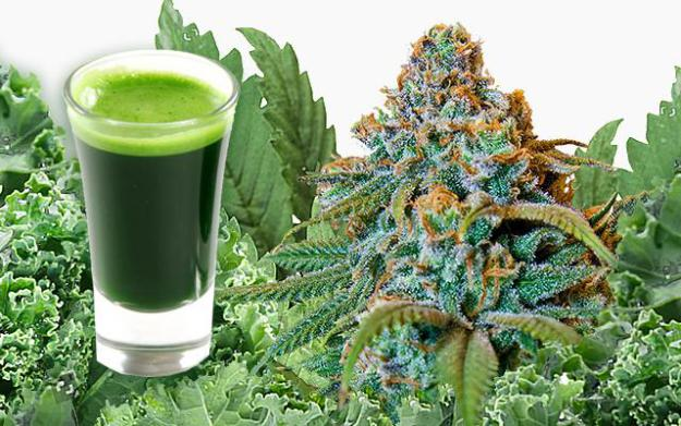 Kale-Cannabis Hybrid Power http://healthandwellness.pw/scientists-successfully-breed-kale-with-cannabis/