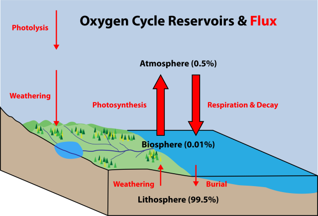 Oxygen Cycle / Reservoirs Source