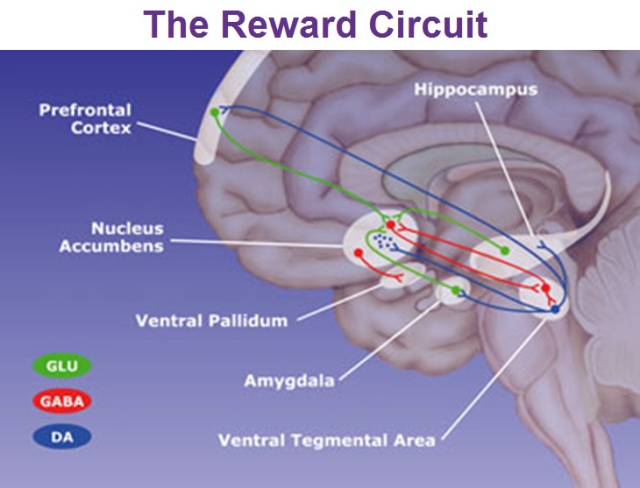 Circuits of Reward Source
