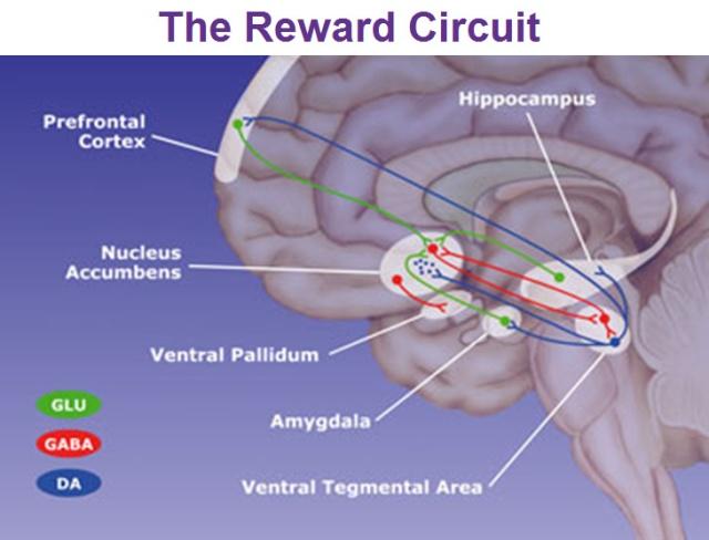 Circuits of Reward Source
